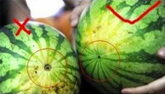 太實用了!賣了13年的水果販子教你怎麼挑好水果!2