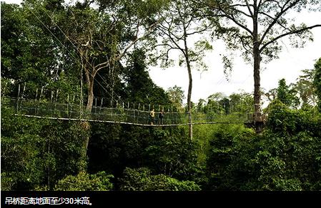 1.悬桥探险(Canopy Walkway)2
