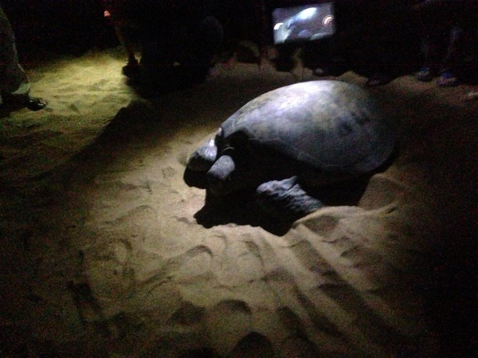 现在是海龟生蛋的季节2