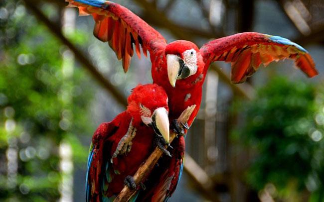 melaka-bird-park-1
