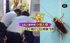 【一秒都待不下去!】2个国际航班竟然出现100多只『小强』到处跑! 网友: 我应该会直接跳飞机!